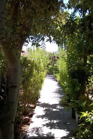 facilites baha ammes garden-07