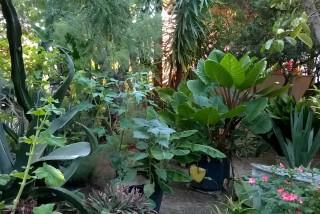 facilites baha ammes garden-12