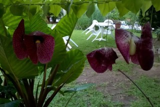 facilites baha ammes garden-14