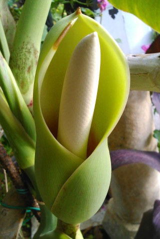 facilites baha ammes garden-16