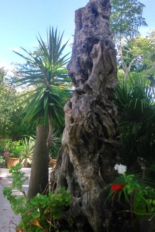 facilites baha ammes garden-18