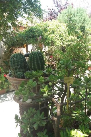 facilites baha ammes garden-20
