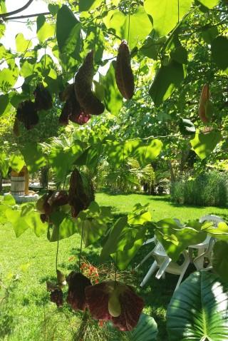 facilites baha ammes garden-21