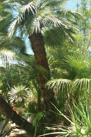 facilites baha ammes garden-31
