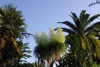 facilites baha ammes garden-36