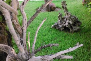 facilites baha ammes garden-42