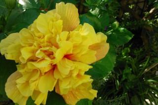 facilites baha ammes garden-47
