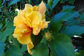 facilites baha ammes garden-48