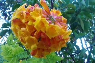 facilites baha ammes garden-51