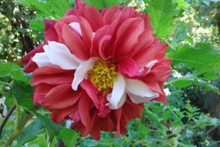 facilites baha ammes garden-52