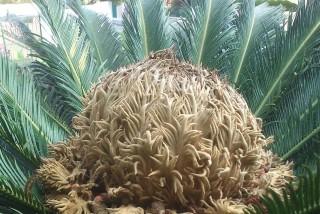 facilites baha ammes garden-55