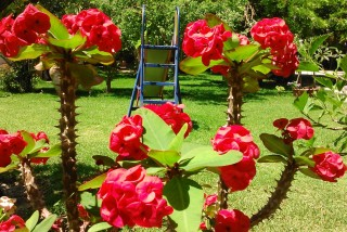facilites baha ammes garden-62